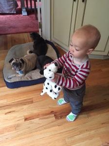 Freddie and Pugs
